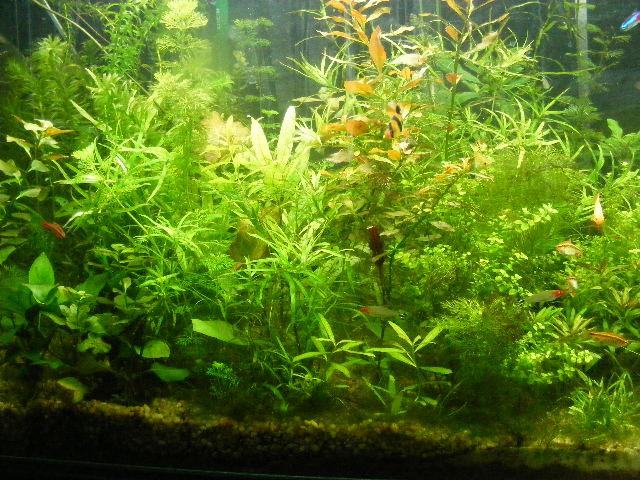 Mision de las plantas acuaticas for Plantas para estanques de peces