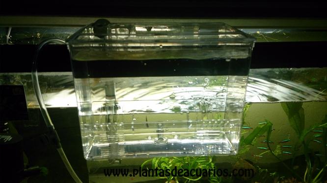 Aclimatador-paridera peces - Haga un click en la imagen para cerrar