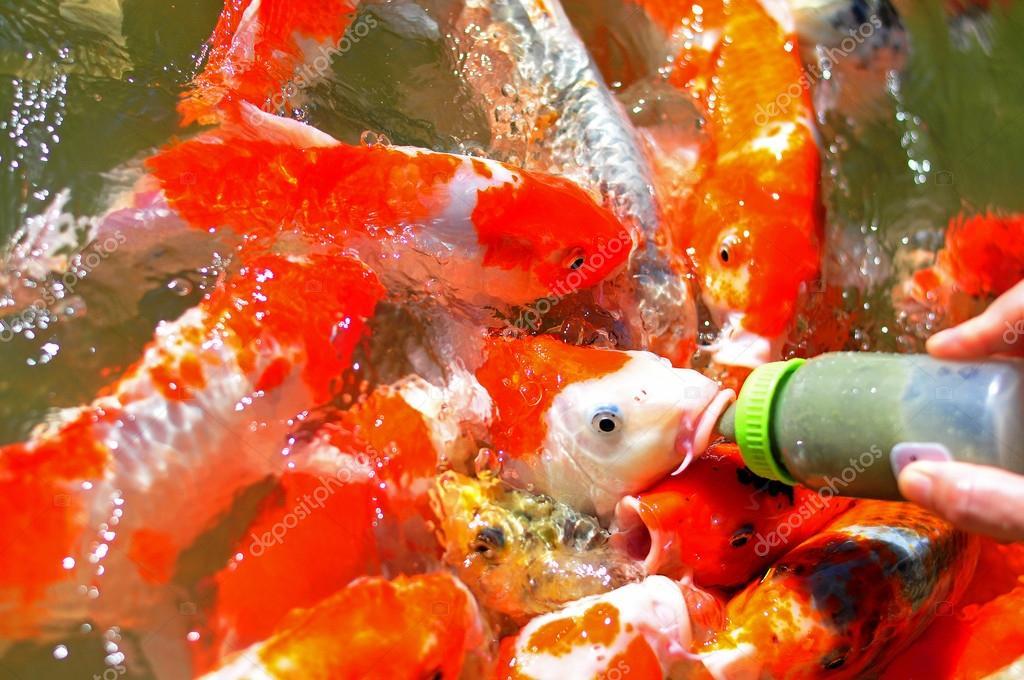 alimentaci n de los peces tropicales