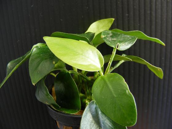 Plantas de interior cuidado de plantas page 5 - Plantas de interior que no necesitan luz ...