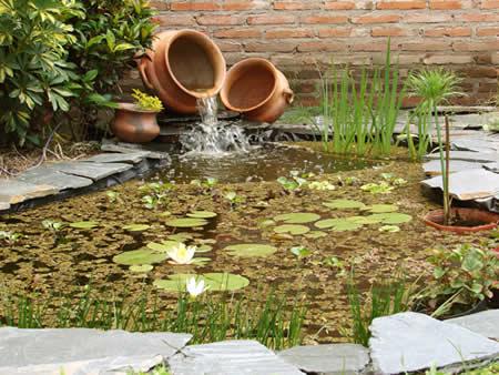 Estanque plantas de estanque peces de estanque venta for Peces para criar en estanques