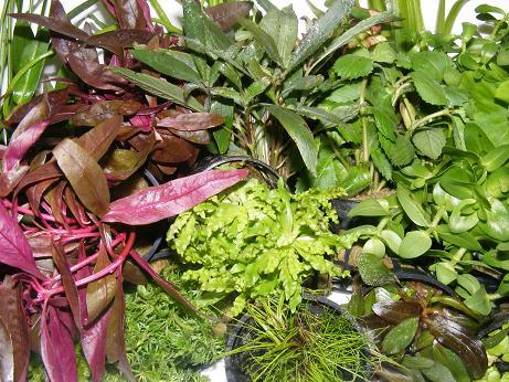 Plantas paludarios y terrarios - Plantas para terrarios ...